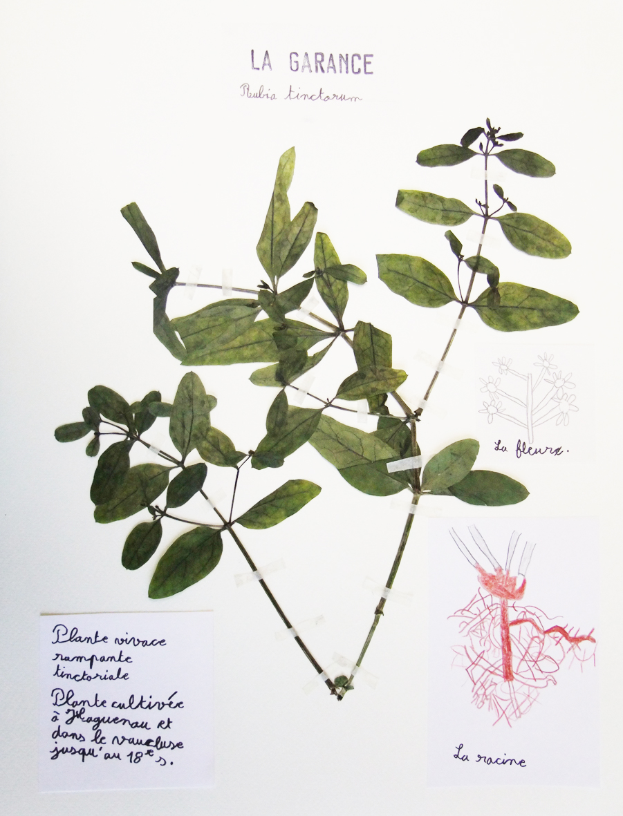 Herbier arts visuels 67 - Exemple d herbier original ...