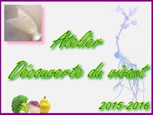 atelier_decouverte_vivant